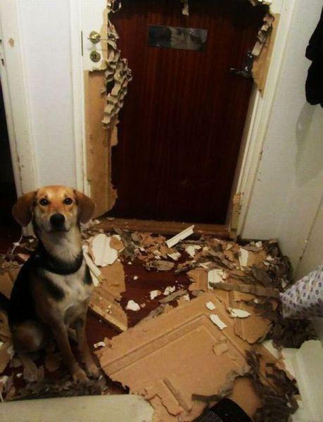 Le bêtisier de nos chiens - Page 7 Tumblr_mhetd4XF9D1r0wqrdo1_500