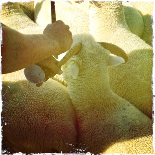 Loin de la foule déchaînée de Thomas Vinterberg avec Carey Mulligan (2014) Tumblr_mud2afYKho1shd4syo1_500