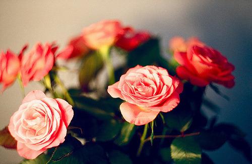 ~Floriiii~ - Page 9 Tumblr_mj0qn7aIC51qis73po1_500