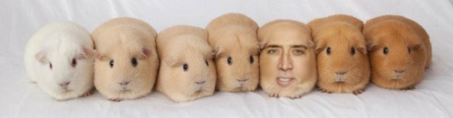 El topic de Nicolas Cage - Página 2 Tumblr_mftyywFFJY1s0bx6po1_500