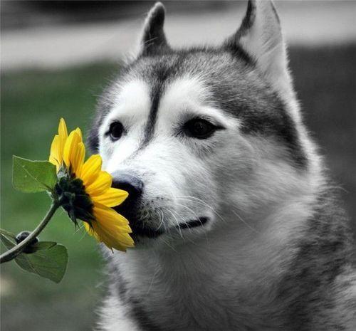Samo jedan cvet Tumblr_lbs7buxk0T1qbj8vqo1_500