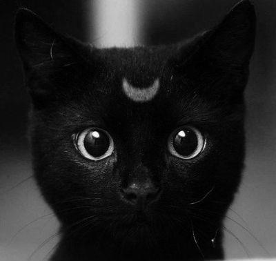 Warrior Cats [RP APP] Tumblr_lp30eiSYpM1qfk6vyo1_400