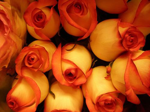 Lulet dhe kuptimi i ngjyrave te tyre  Tumblr_m2qxd9iJoR1qmyebso1_500