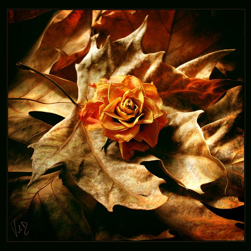 Samo jedan cvet Tumblr_m4gn8yf7of1rwqjioo1_1280