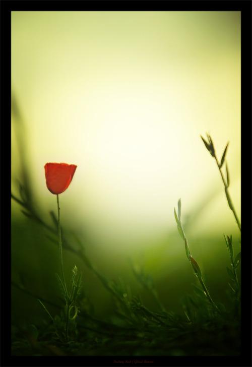 Samo jedan cvet Tumblr_m5f7dpn0QM1ry0rieo1_500