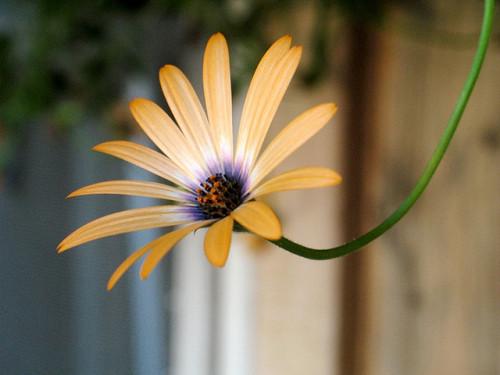 Samo jedan cvet Tumblr_m5gefxgfXw1r92xc2o1_500