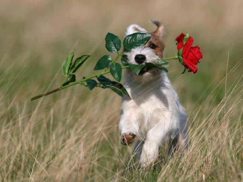 Samo jedan cvet Tumblr_m5gihf3Ymw1qiyrh5o1_500