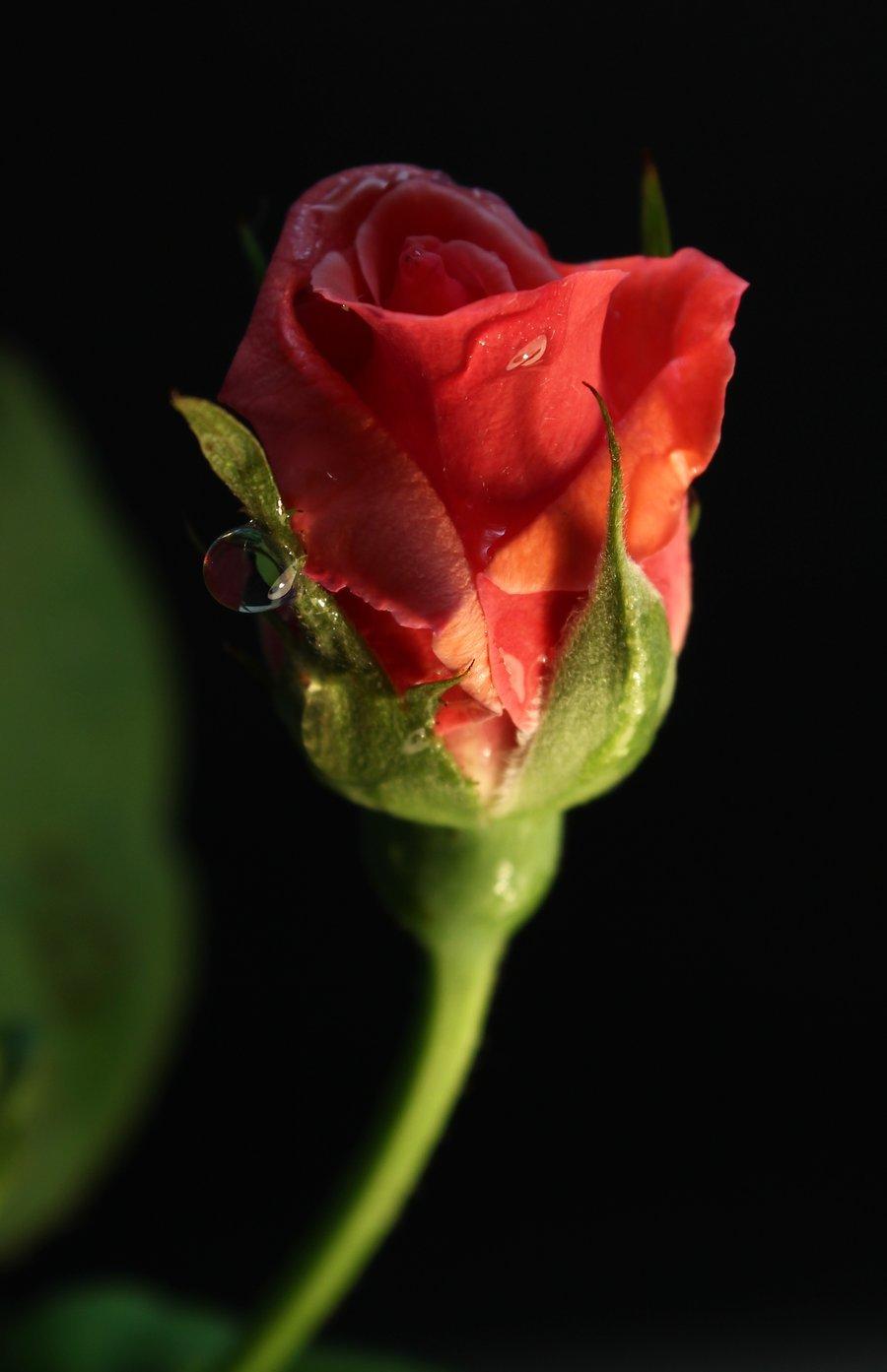 Samo jedan cvet Tumblr_m5yp9tBrAe1rqvwcoo1_1280