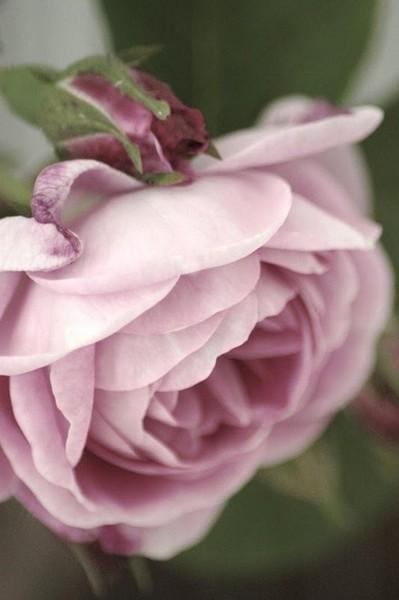 Samo jedan cvet Tumblr_m6x31lk9Vx1r9pmrio1_400