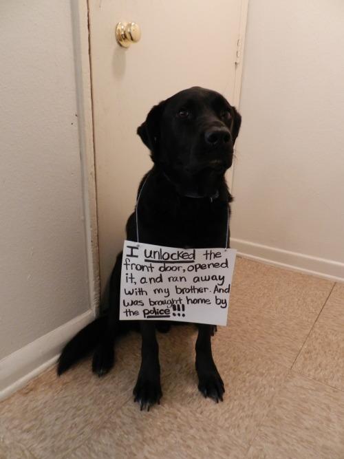 Dog Shaming.com: les chiens de la honte Tumblr_m96drxznM21re4ne0o1_500