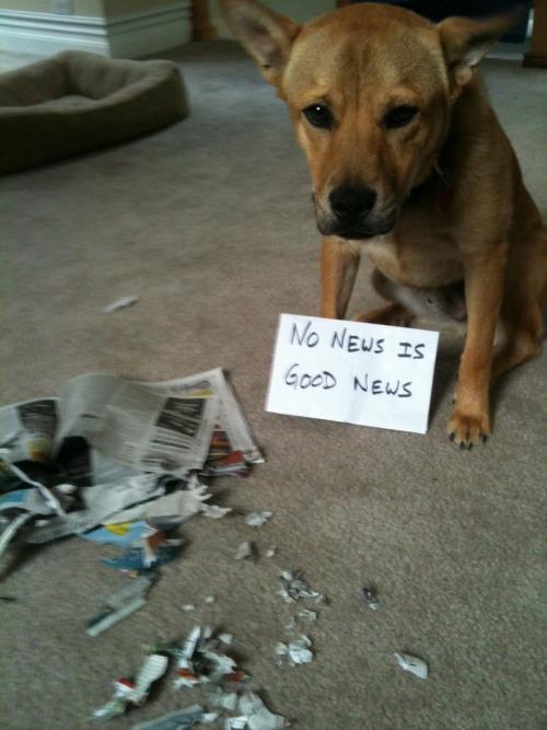 Dog Shaming.com: les chiens de la honte Tumblr_m9mie7HNWK1re4ne0o1_500