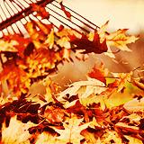 """""""Уж осень на дворе"""" (с) - Страница 2 Tumblr_m9xv9tQiEr1rxx90eo19_r1_250"""