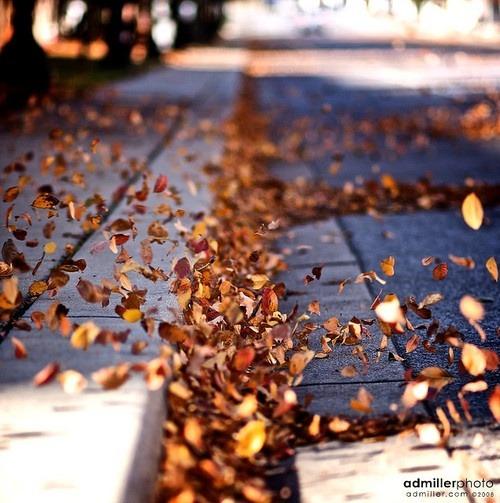 Jesen - Page 7 Tumblr_mdemifHK9o1r6b2mso1_500