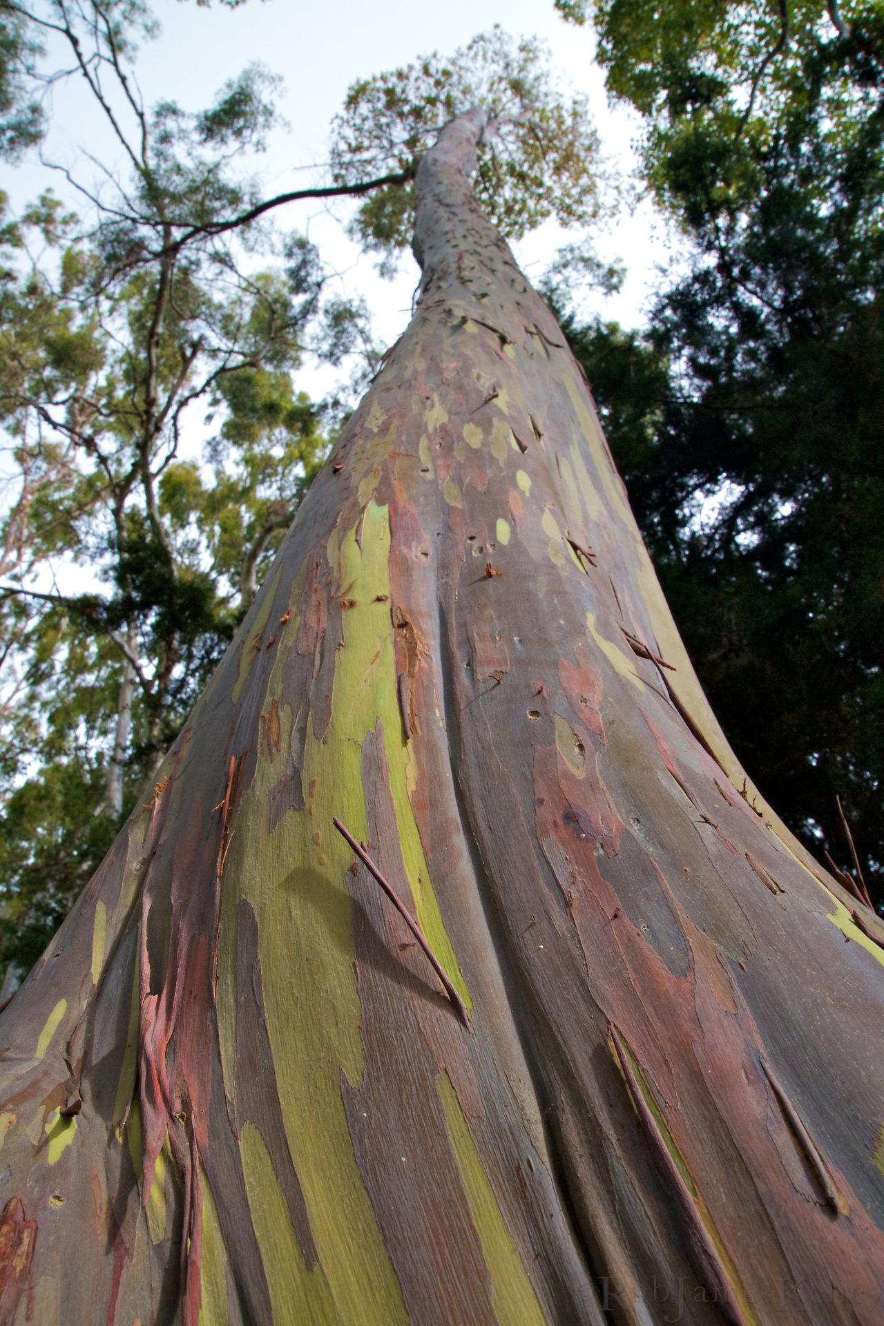 Un árbol con un tronco de lo mas peculiar ♥♥♥ Una pasada Tumblr_mdrnz4xN221r9fk57o1_1280