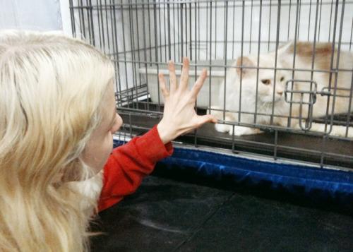alex&pas ➜ i'm a kitty, so play with me. Tumblr_luzpd1RQ0M1r377cko1_500