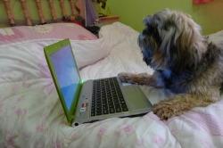 Laptop`uri - Page 3 Tumblr_m35jzcrXMP1qkk0nqo1_250