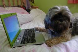 Laptop`uri - Page 3 Tumblr_m35jzcrXMP1qkk0nqo2_250