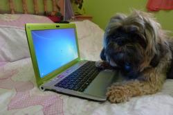 Laptop`uri - Page 3 Tumblr_m35jzcrXMP1qkk0nqo5_250