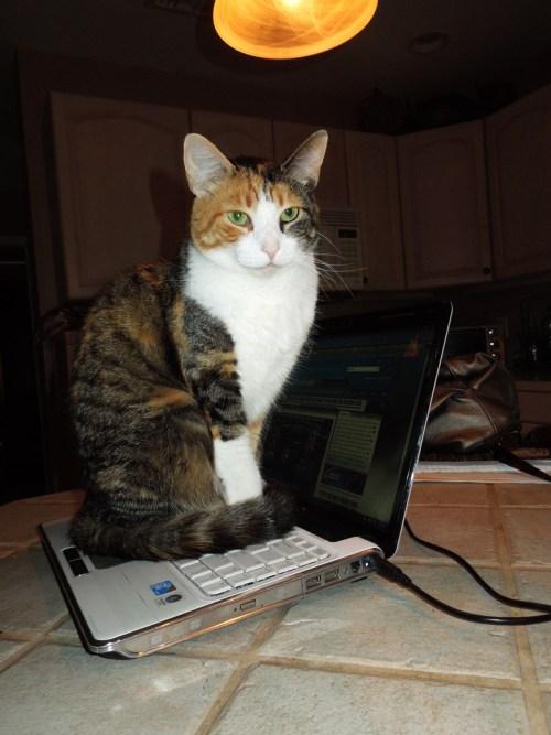 Laptop`uri - Page 4 Tumblr_m33zwu8CAq1qb857yo1_500