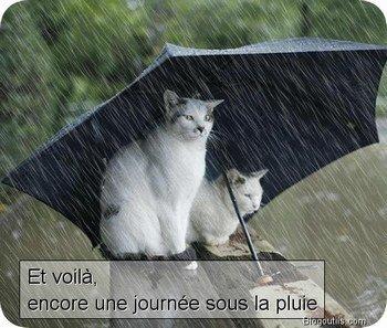 Le Thread du BONJOUR/BONSOIR  les Zanimo's  - Page 5 3113870969_1_5_a7z7MDcA