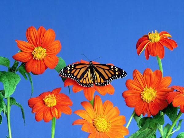 Bienvenidos al nuevo foro de apoyo a Noe #250 / 28.04.15 ~ 30.04.15 - Página 4 Flores_y_mariposa