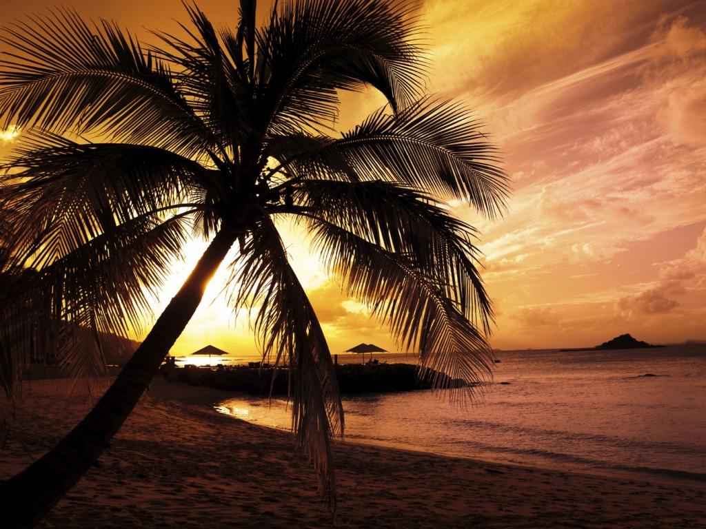 Zalazak sunca  - Page 2 Prekrasan-zalazak-sunca-uz-palmu-na-plazi-download-besplatne-pozadine-za-desktop-1024-x-768-slike-kompjuteri-priroda