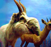 Extinction d'espèces 250px-Saiga_Antelope