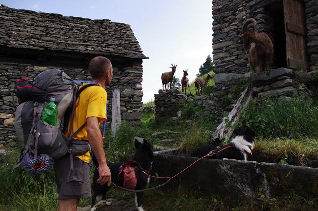 RANDOCABO sur la Via Alpina IMGP0189