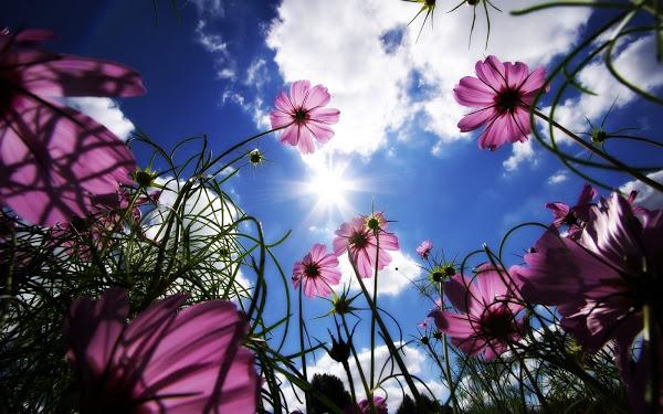 Bienvenidos al nuevo foro de apoyo a Noe #250 / 28.04.15 ~ 30.04.15 - Página 4 Paisaje_con_flores