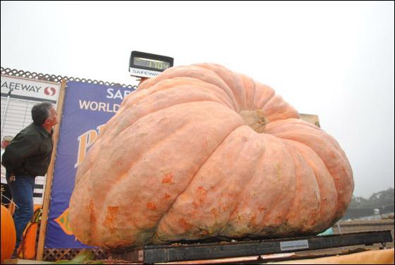 أمريكي يفوز بـ11 الف دولار بعد زراعته اكبر يقطينة تزن 773 كغم Biggest_Pumpkin_03