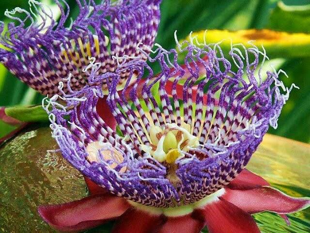 Magično cveće! Untitledattachment00016