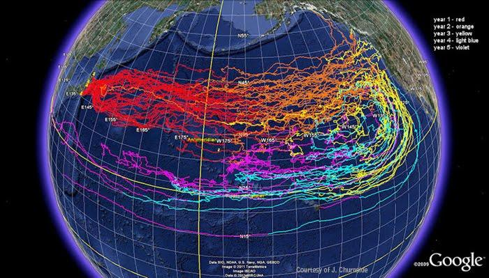 La nature reprend ses droits sur l'homme  JapanDebrisMap1