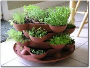 عمل حديقه اعشاب بالمطبخ بنفسك Indoor-herb-garden-2-300x226