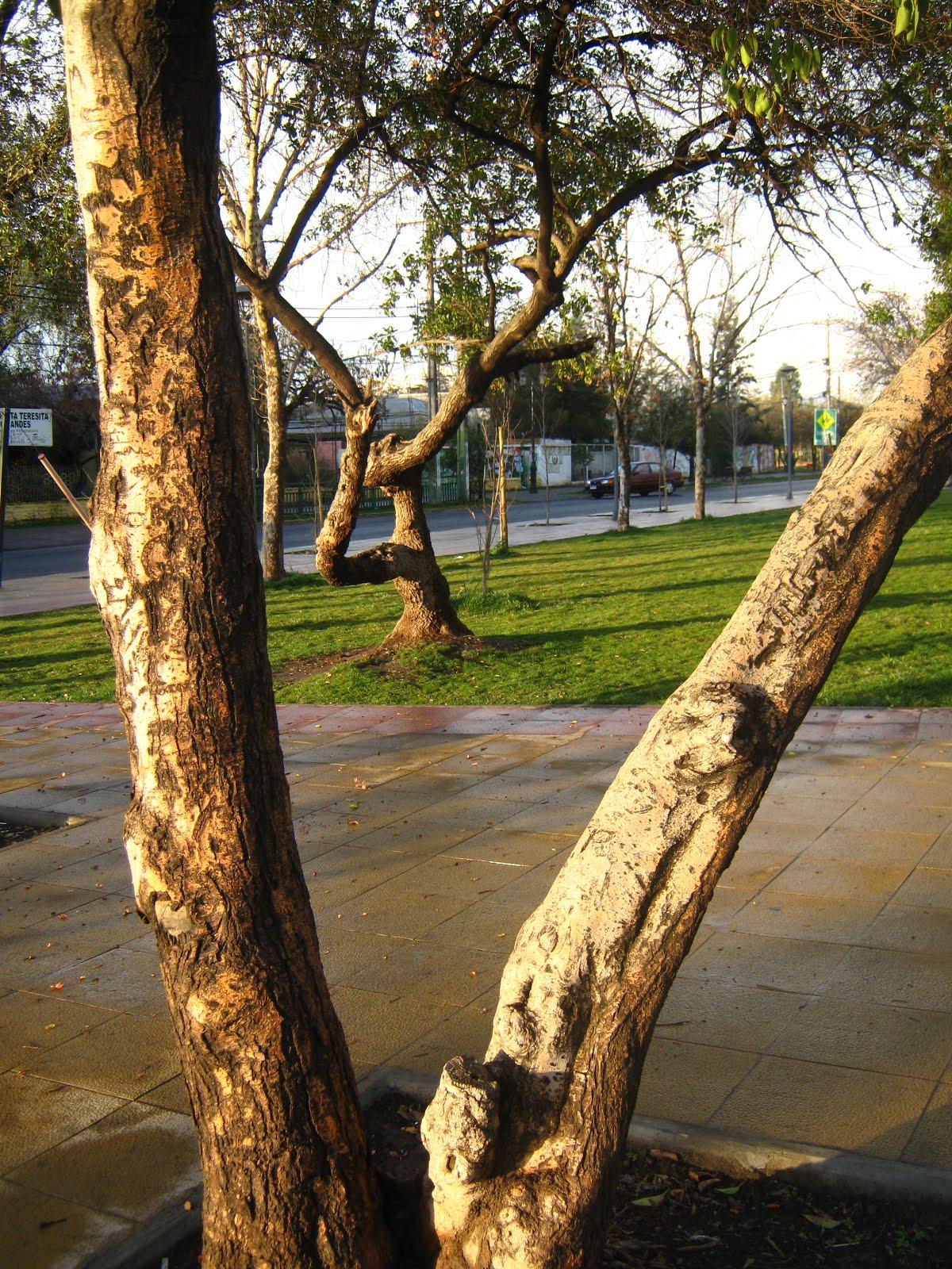 Plazas y parques de La Granja   Fotos IMG_9819