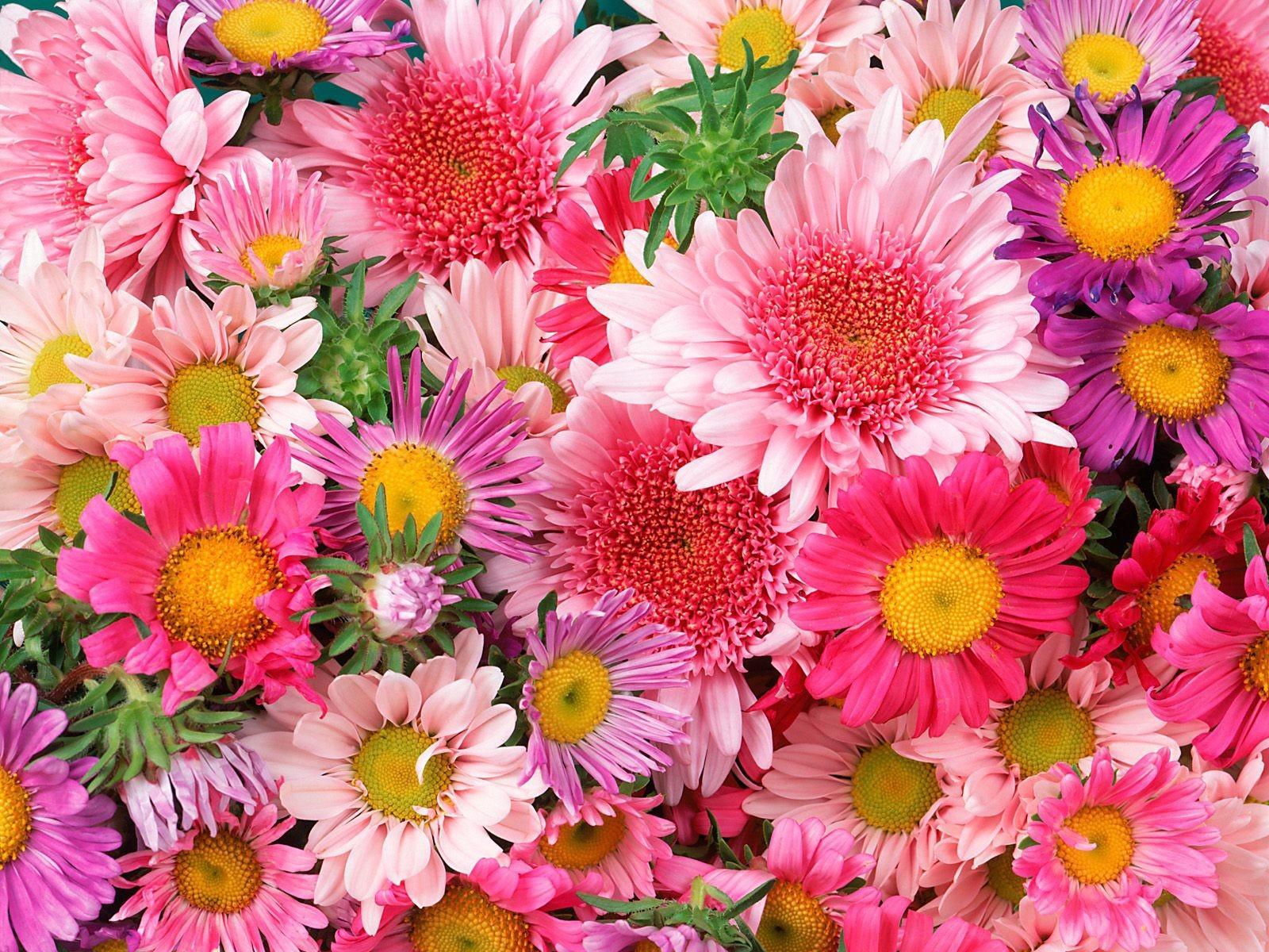 L'amoureuse de fleur..Veut des fleurs ;) 1bcb7642