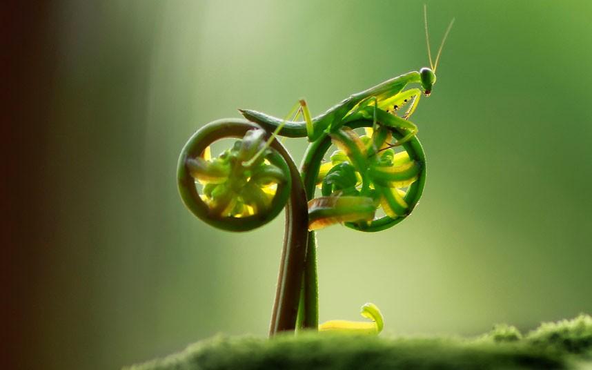 Le topic PUNK de doom - Page 5 Praying-mantis-bike