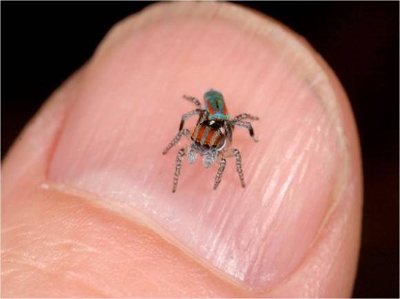 اجمل عنكبوت فى العالم Image0031-580x434