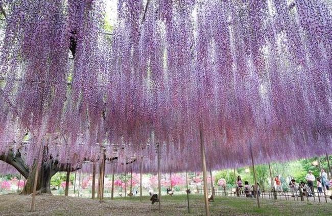 அழகிய ஜப்பான் படங்கள் சில....... - Page 2 Water_Fall_Flowers_Japan_11