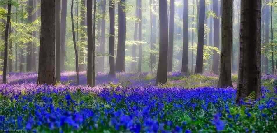 Le secret des arbres Belg