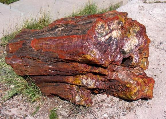أشجار تحمل أسرار الماضي Petwoodcolor-580x416