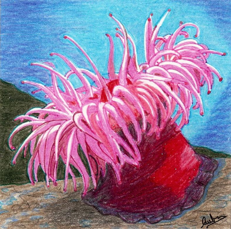 planta come aliens Anemona1