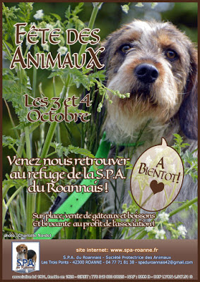 LUBIE  -  Teckel  10 ans  (5 ans de refuge)   SPA  DE  ROANNE  (42) FeteDesAnimaux2015-blog