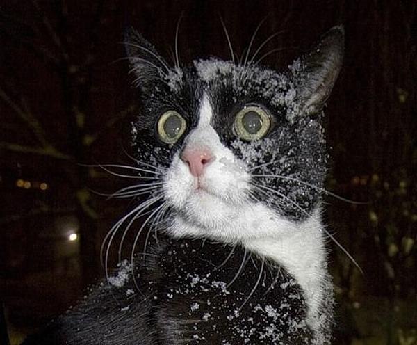 Une flamme... pas comme les autres ! Funny-cat-lolcat-shocked-cat