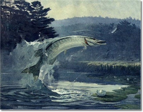 Omaž ribolovcu i ribolovu - Page 4 Goadby-fish-paintings-prints-note-cards-northern-pike