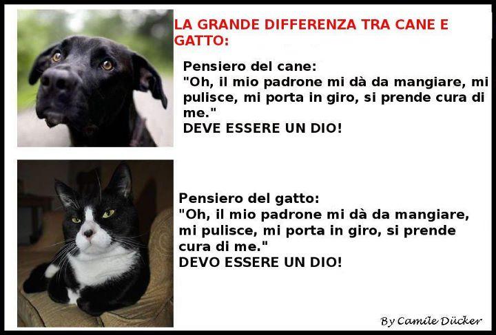 Risate bestiali Cane-Gatto