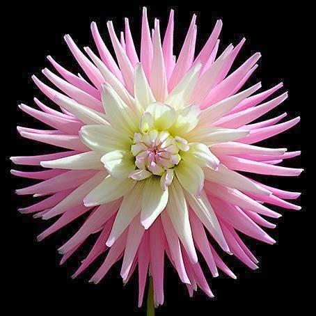 Magično cveće! Untitledattachment00049