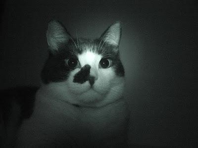 Временна почивка 800px-Cat_dilated_pupils
