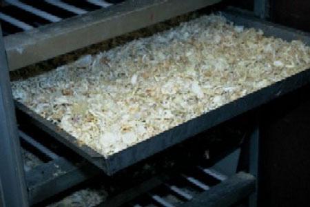 دودة القز ومراحل غزل الحرير وتجميعه (صانعة الحرير)3 Silk-worms1