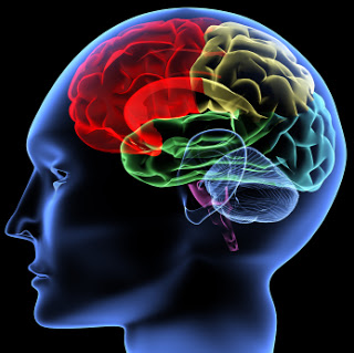 Power Robs the Brain of Empathy Human-brain