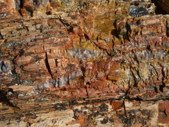 أشجار تحمل أسرار الماضي 222-580x435